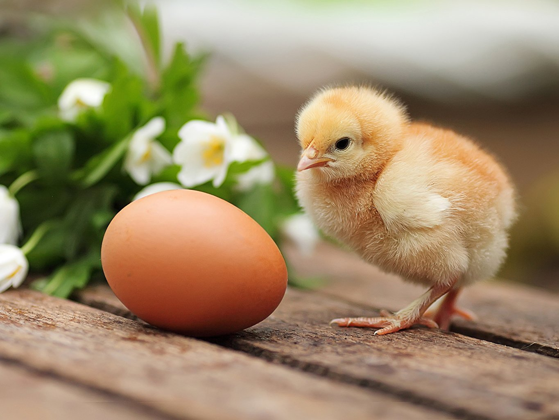 Как действует приворот на яйцо