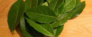 Как загадать желание на лавровом листе