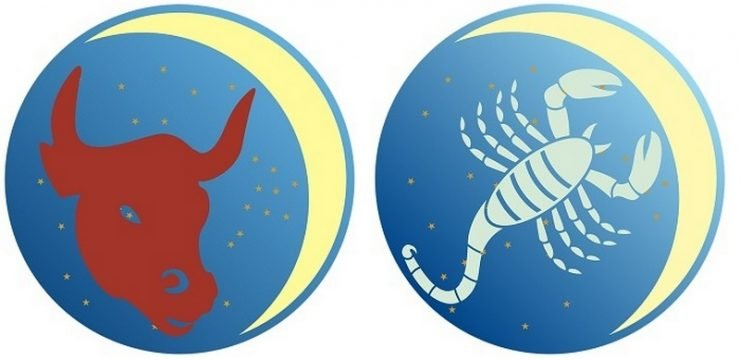 Телец и Скорпион